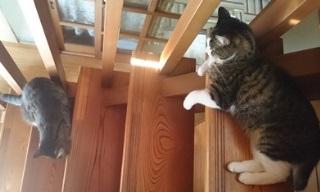 Sokken社員宅のネコ達