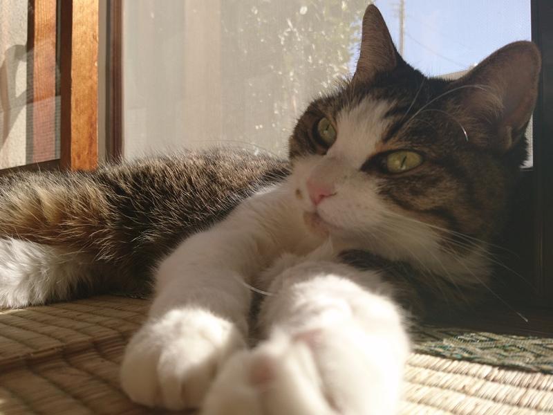母ネコ,サイ