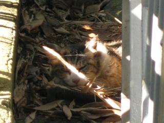 落ち葉の中で眠るさび