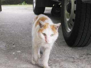 チョビ太の後ろに警護ネコ