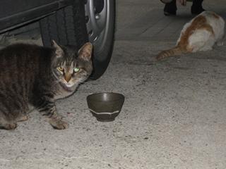 キジトラ猫も現れた