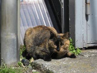 名無しの猫3
