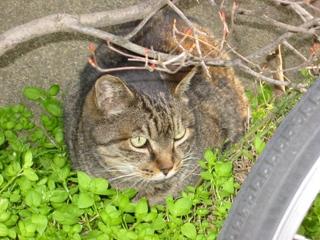 名無しの猫1