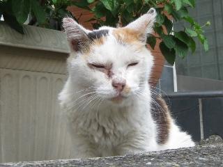 ヨボヨボ猫