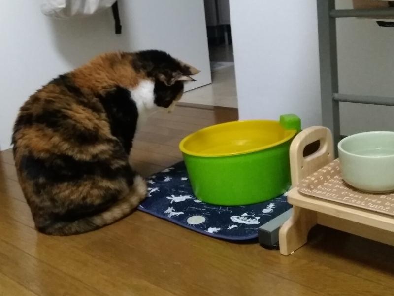 多摩子の食卓
