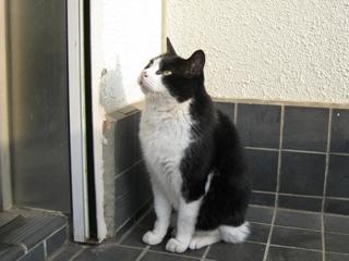 ネコハウス増設を懇願する中ネコ