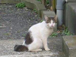 名無しの猫2