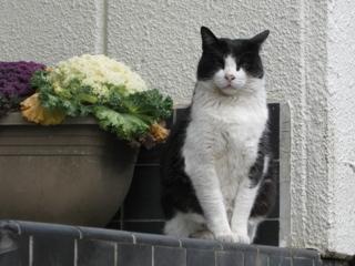 忠猫、中ネコ?