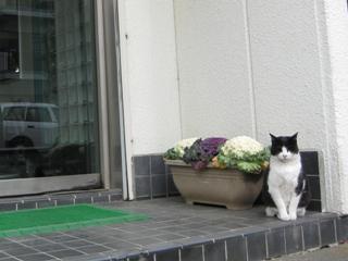 今日も招き猫?