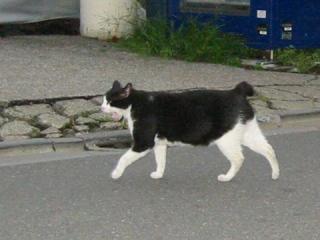 中ネコ猛ダッシュ!