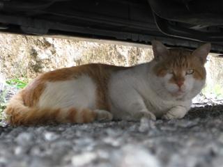 名無しの猫4