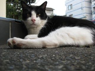 中ネコは新ネコハウスを要求