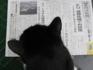新聞を読む中ネコ
