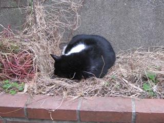 寒さで丸くなった中ネコ