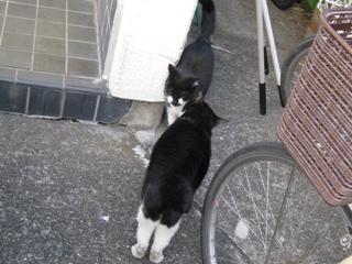 中ネコに報告するハナマル