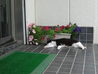 中ネコ熟睡中