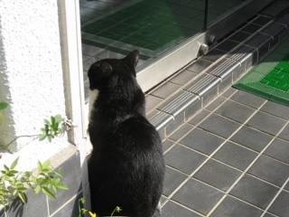 玄関の中ネコ