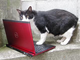 メールをチェックする中ネコ