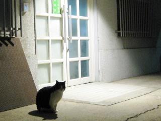 夜の司測研