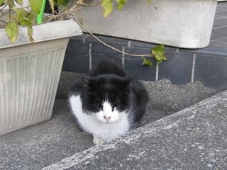 冬の中ネコ