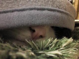 アケボノ冬眠?