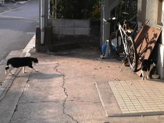 中ネコ vs クローン