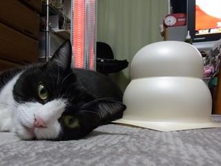 アケボノと大きい鏡餅