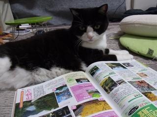 雑誌を見るアケボノ